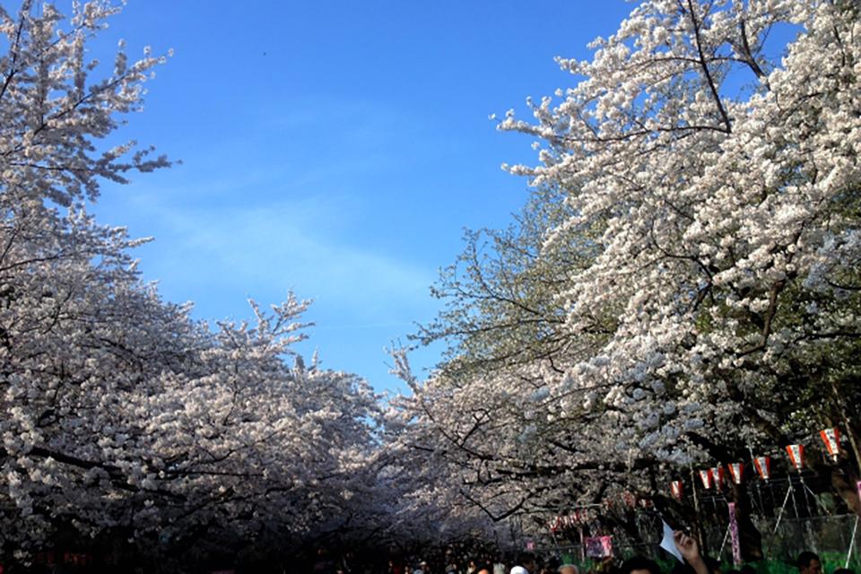 Mùa hoa anh đào thứ 3/3度目の桜