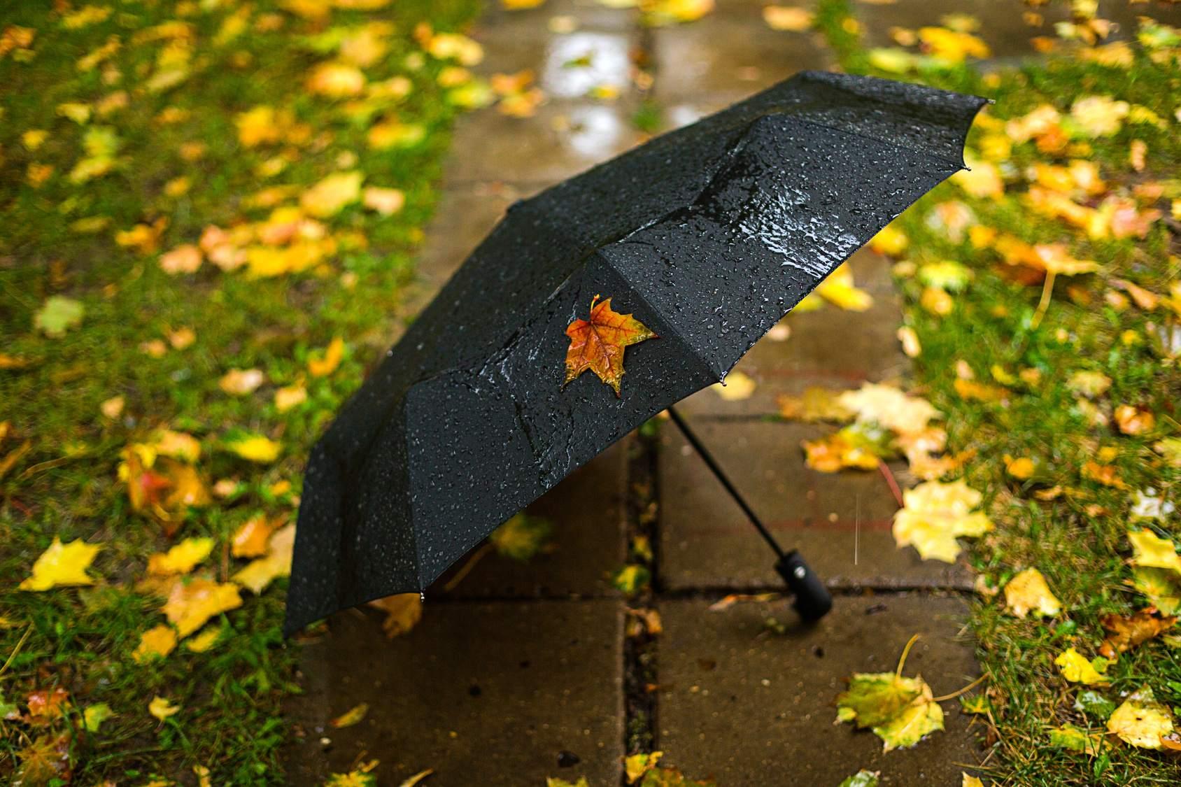 Cơn mưa đầu hè/小糠雨
