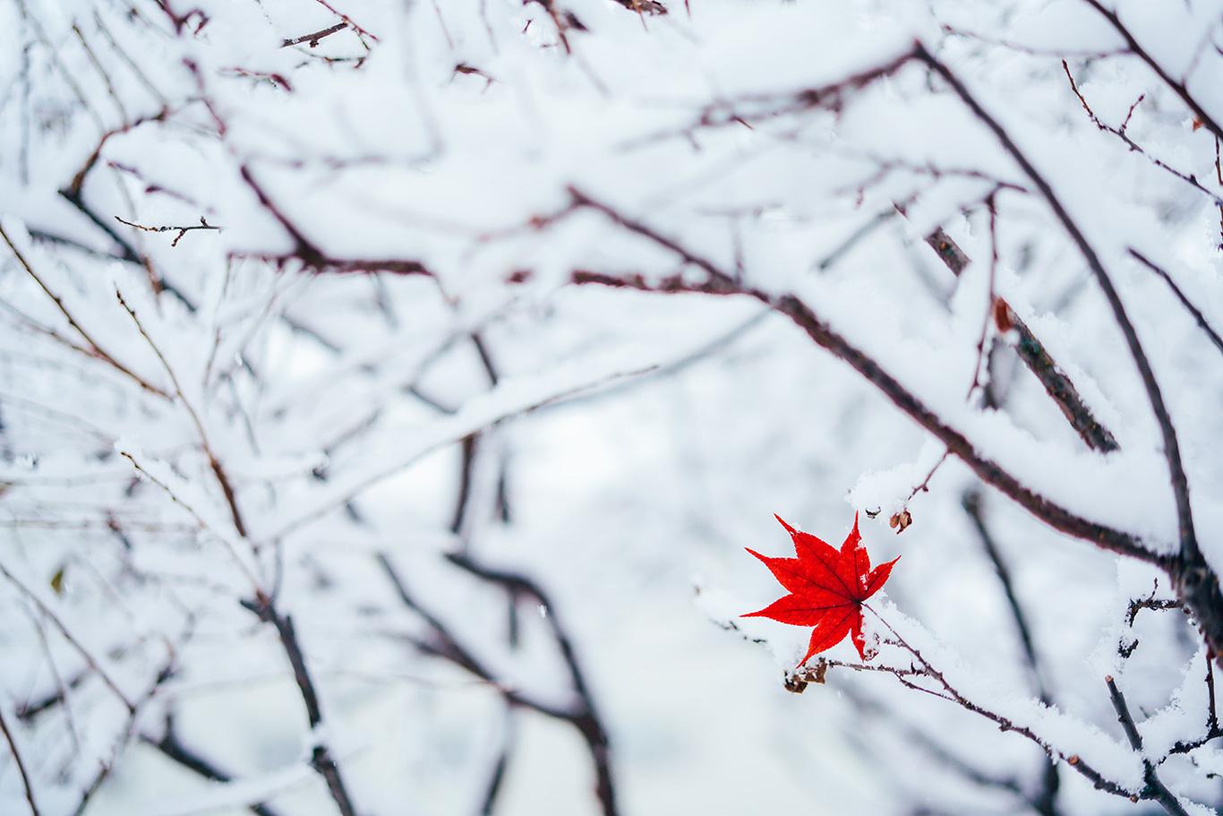 हिउ पर्ने बेला /雪が降る時