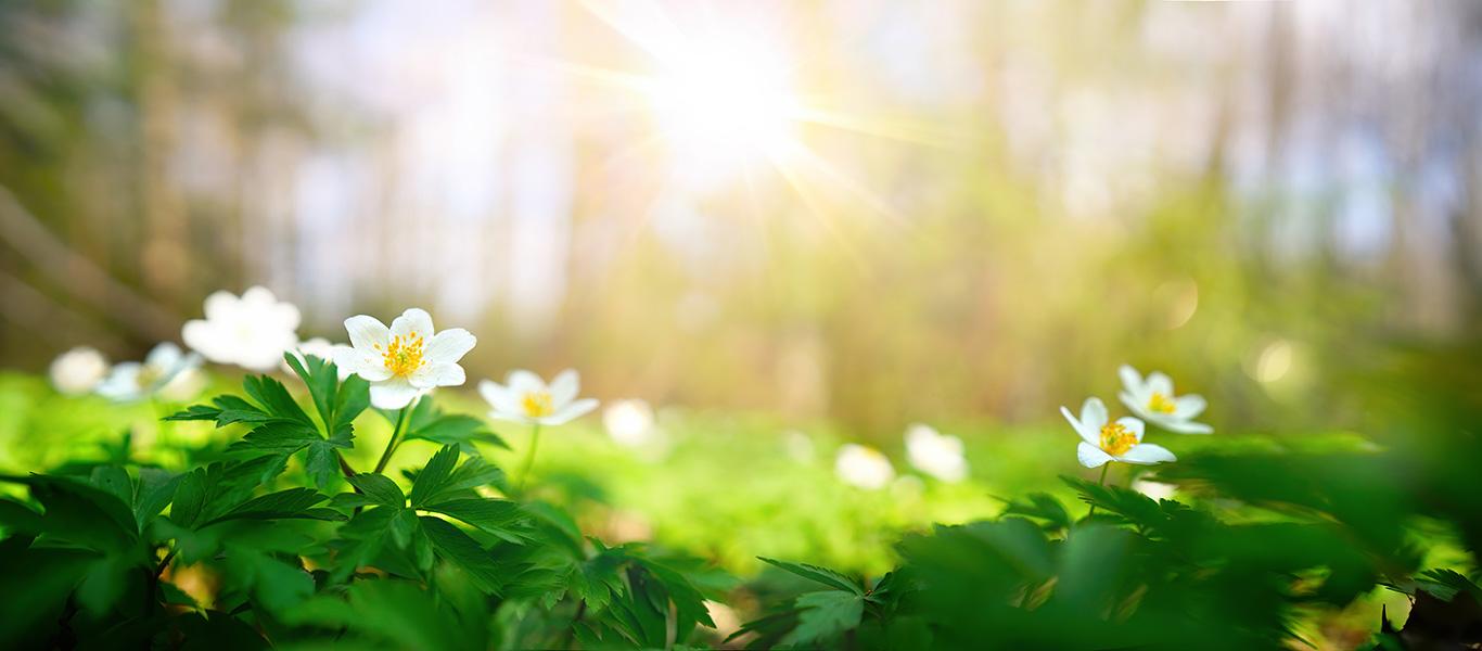 봄날/春の日
